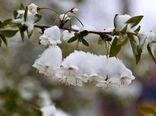 توصیههایی برای باغداران و گلخانه داران برای مقابله با یخبندان