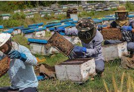 سرشماری زنبورستانهای کشور منتفی شد