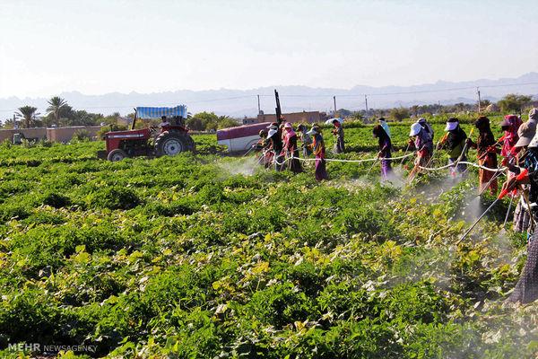 اعطای «پروانه کاربرد کد حد مجاز آلایندهها در محصولات کشاورزی» به فارس