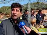 رشد 50 درصدی صادرات کالاهای کشاورزی از گمرکات آذربایجان شرقی در سالجاری