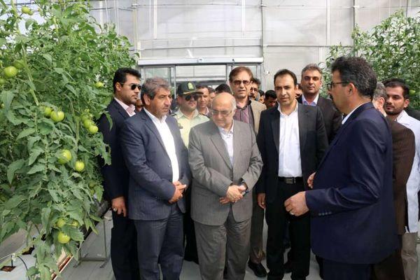 دو طرح بخش کشاورزی در شهرستان ارزوئیه افتتاح شد