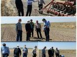 نظارت میدانی بر کاشت کلزا در شهرستان البرز
