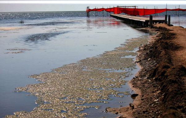 کاهش سطح آب دریای خزر علت خشکی بخشی از تالاب