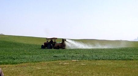 آغاز کنترل شیمیایی علفهای هرز مزارع غلات استان مرکزی