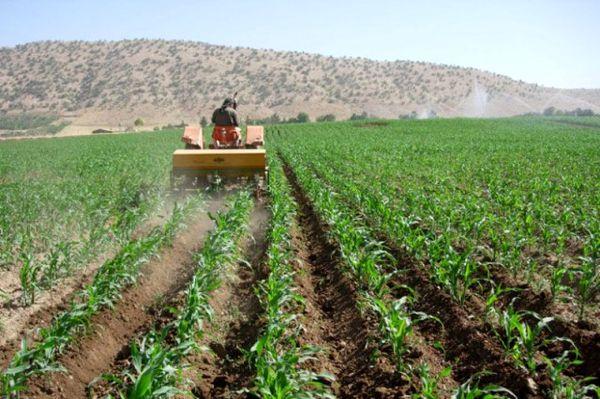 کشت پاییزه محصولات در 90هزار هکتار اراضی سیستان و بلوچستان آغاز شد