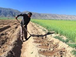 تسهیل خدماترسانی به بهرهبرداران بخش کشاورزی شهرکرد