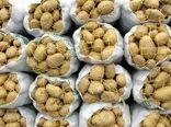 هشدار جدی برای جلوگیری از خسارت بید سیب زمینی در انبارها