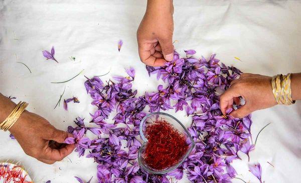 صادرات 300 تن زعفران در سال گذشته