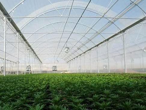 تحقق ۷۰ درصدی برنامه ابلاغی توسعه کشتهای گلخانه ای در استان چهارمحال و بختیاری