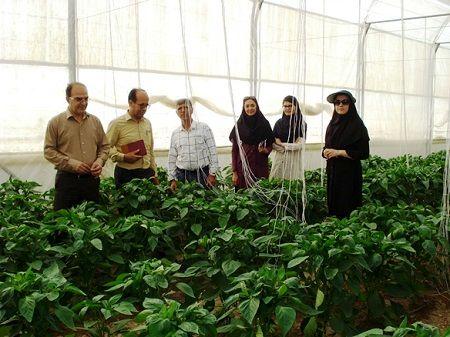آموزش مهارتی تعداد 453 نفر نیروی کار ماهر گلخانههای استان آذربایجان شرقی
