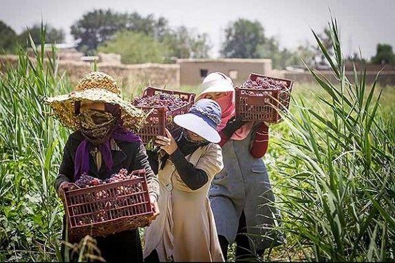 انتخاب 60 نفر از زنان روستایی به عنوان زن تسهیلگر روستایی درسطح استان کرمان