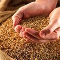 ادعای ناخالصی نامتعارف در محمولههای گندم کذب است
