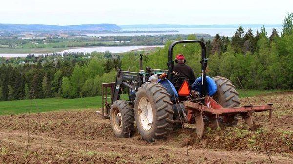 نقاط مثبت و منفی کشاورزی در آمار کانادا برجسته شدند