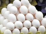 رتبه اول نمین در تولید تخم مرغ خوراکی استان اردبیل