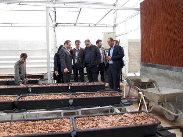بهرهبرداری از گلخانه گل رز رباط کریم در دهه فجر امسال