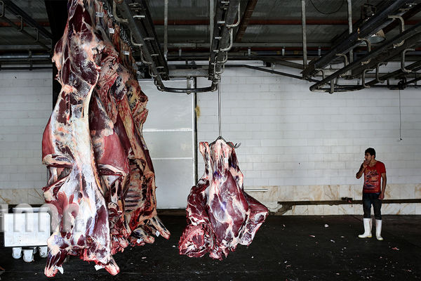 تولید 99 هزار تن گوشت قرمز در تابستان امسال