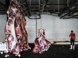 تولید سالانه 90 هزار تن گوشت قرمز در سیستان و بلوچستان
