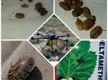 مبارزه با آفات خسارتزا در مزارع غلات شهرستان اشتهارد