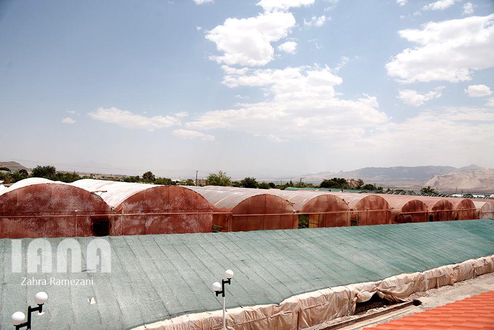 گلخانه صادراتی محلات استان مرکزی