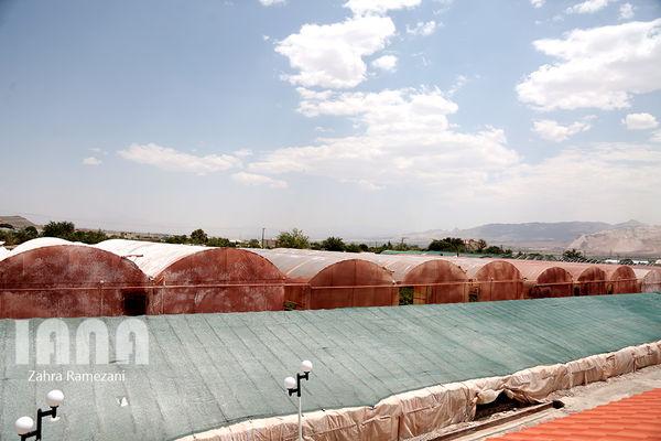 ایجاد 121هکتار گلخانه جدید در استان تهران