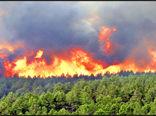 ۹۵درصد آتش سوزی در جنگل های کشور عامل انسانی دارد