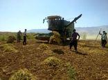 پیش بینی برداشت یک هزار و 200 تن لوبیا در شهرستان اردل