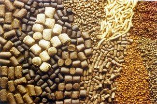 صادرات 6.5 هزار تن خوراک آبزیان از چهارمحال و بختیاری به خارج کشور