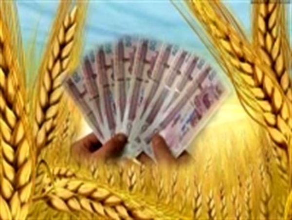۵۰ درصد مطالبات گندمکاران خراسان جنوبی پرداخت شد