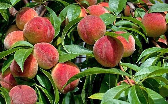تولید سالانه 3 میلیون تن انواع محصولات کشاورزی در کردستان