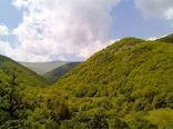 نقش جنگل در جلوگیری از فرسایش خاک و مدیریت منابع آب