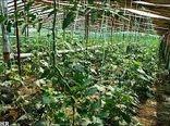 سطح گلخانههای خراسان شمالی از سال 92 تاکنون روند رو به رشدی داشته است