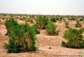 اجرای عملیات بیولوژیکی و مکانیکی در مدیریت جامع حوزه آبخیز شهرستان آرادان