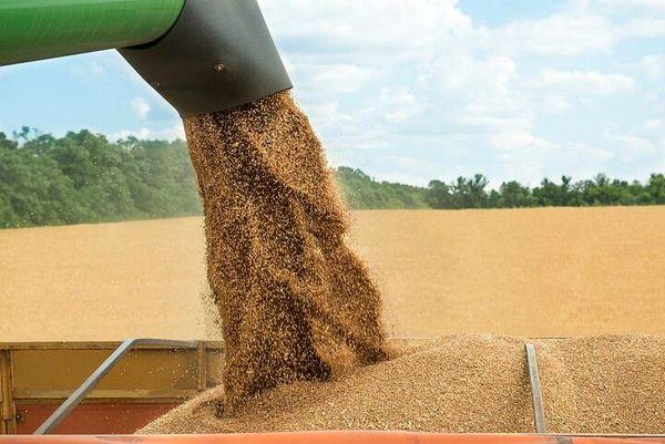 ۳ هزارتن گندم در شهرستان لردگان خریداری می شود
