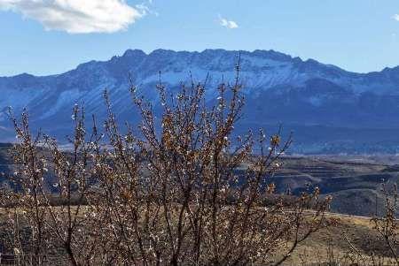 سرمازدگی ۱۴ میلیارد ریال به باغات شهرستان اردل خسارت زد