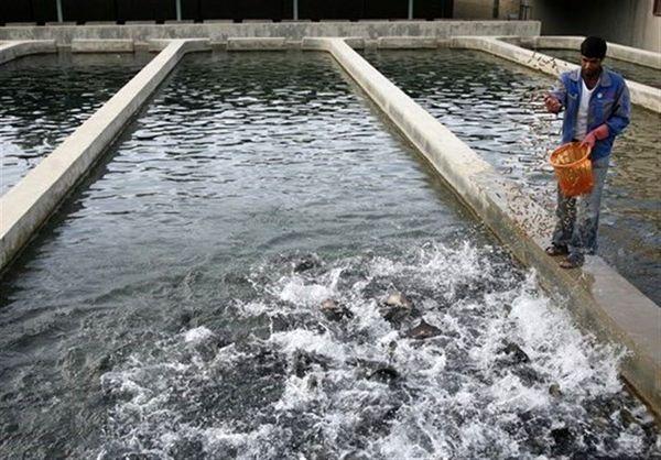 سالانه ۳۹۰ تن ماهی در مهاباد تولید میشود