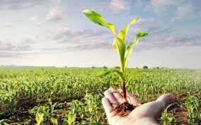 حمایت از تولید کنندگان مهمترین وظیفه مدیریت جهاد کشاورزی شهربابک است