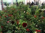 صادرات ۲۲۰ هزار شاخه گل زینتی از یزد