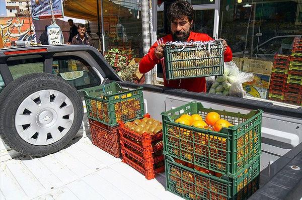 توزیع 1500 تن میوه تنظیم بازار در همدان