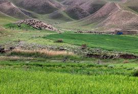 بهرهبرداری از مراتع استان تهران باید بهصورت اصولی انجام شود