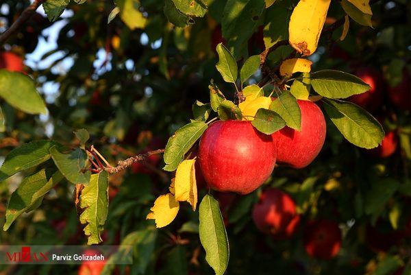 پاییز در قرهداغ - آذربایجان شرقی