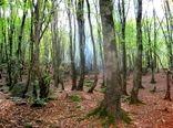 لزوم پرداخت 60 میلیارد تومان برای طرح تنفس جنگلها