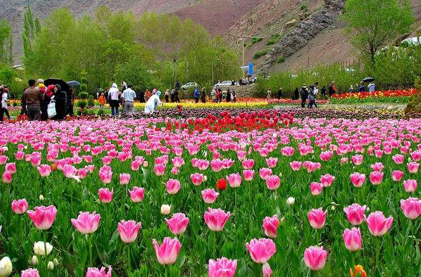 سالانه 44 میلیون شاخه گل در البرز تولید میشود