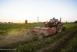 توزیع روزانه ۶۰۰ دستگاه تراکتور در بین کشاورزان