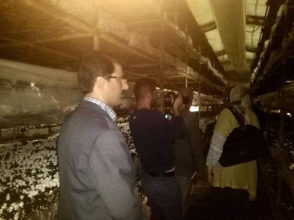 بازدید نمایندگان شرکت توسعه تجارت جهانی از شرکت قارچ پارس شهریار