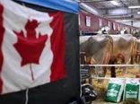 حمایت 584 میلیون دلاری کانادا از صنایع لبنی