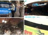 کشف محموله غیرمجاز حامل پرندههای وحشی در جنوب شرق استان تهران
