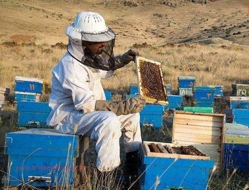 تمدید زمان سرشماری زنبورستان ها