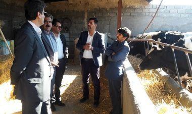 دیدار مدیر جهادکشاورزی با بخشدار آیسک و بازدید از واحدهای دامداری و مرغداری