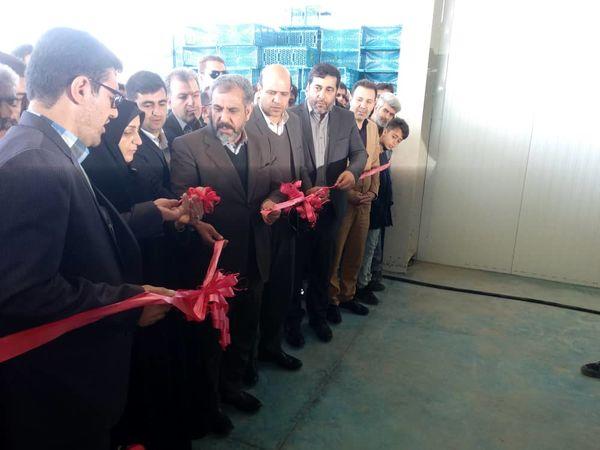یک طرح صنایع کشاورزی در شهرستان تاکستان افتتاح و به بهره برداری رسید