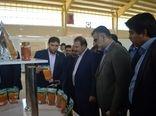 واحد صنعتی بسته بندی حبوبات، خشکبار و ادویهجات در شیراز افتتاح شد